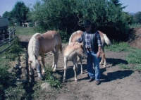 Gustav with his horses