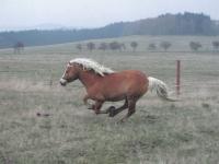 From Gustav's ranch