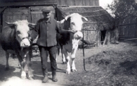 Two cows and a flock of poultry were an important part of the life of a broad family...