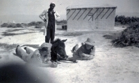 """Jan (left) with his favourite small donkey in the """"down"""" position; on the photograph, it is apparent that the donkey's owner is looking in disbelief at the scene."""