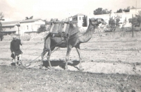 A typical Palestinian villager with a plough