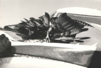 """This is a photograph illustrating the collision of dad's Ilyushin IL-14 with an eagle. I got beautiful feathers for my """"Indian"""" headdress."""