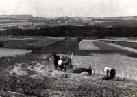 Field belonging to the Davídek family's farm (witness's father and mother in the photo)