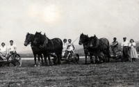haymaking in 1955