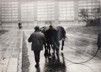 Ostrava-Hrabůvka on Daniel Balabán's photography - early 1970s