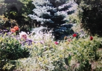 A contemporary photo taken in her most beloved place - her garden