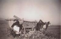 Práce na poli, tatínek a maminka (František a Antonie Šestákovi) při nakládání cukrové řepy, 40. léta 20. století