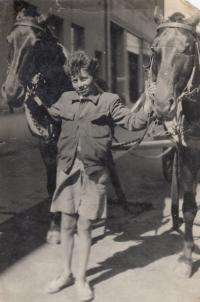 Miloslav Kopfstein s otcovými koňmi (1943)