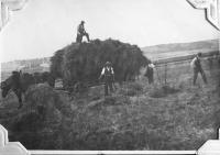 Polní práce, okolí Havlíčkovy Borové