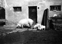 Na rodinném statku Bártů v Porubě