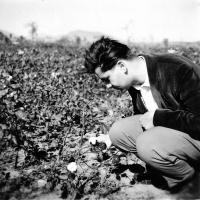 Ivo Dostál si prohlíží rostliny bavlníku / Čína / polovina 50. let