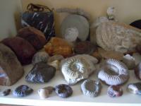 Sbírka zkamenělin nalezených v obl. Mikulčic