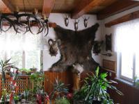 A bear hunted by Josef Hiemer in Slovakia