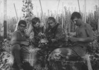Hop picking, Jaroslav Hutka on the left, 1963