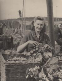 sestra Miluška na rodinné chmelové brigádě