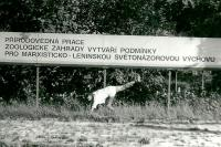 Ivo Mludek / PF 1988