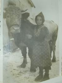 Maria with her kind bull