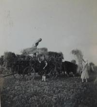 Auf dem Bauernhof in Upper Studenka