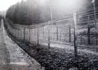 Closed border zone on photography of H.Babora (Prášilsko)