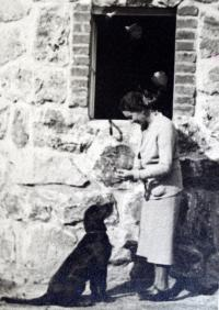 Marie's mother-in-law feeds a deserted dog left behind by the displaced Germans. Photo taken just after the war before their villa in Železná Ruda, which was returned at that time