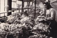 1960 - Vera in horticulture at state farm